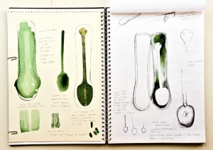 Sketchbook drawings exploring spoon and spoon box