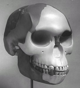 Piltdown Man 